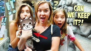 DO WE GET A NEW FAMILY MEMBER? TWIN KITTEN SURPRISE!