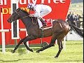 Irish Derby winner Trading Leather dies - Suffers fracture running in Japan Cup 2014 Horse Racing