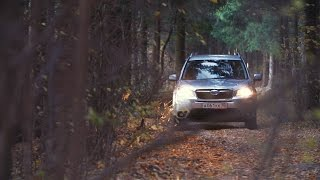 Subaru Forester в осеннем лесу