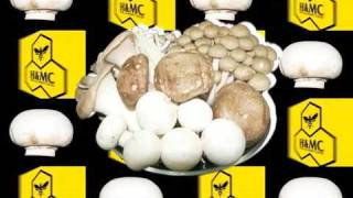 PV MUSHROOM H&MC HIGH AND MIGHTY COLOR JROCK JAPANESE ROCK.