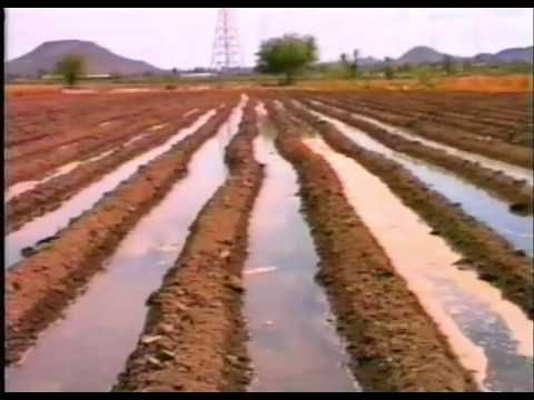 Saving Water in Agriculture Surface Irrigation - Spanish aud
