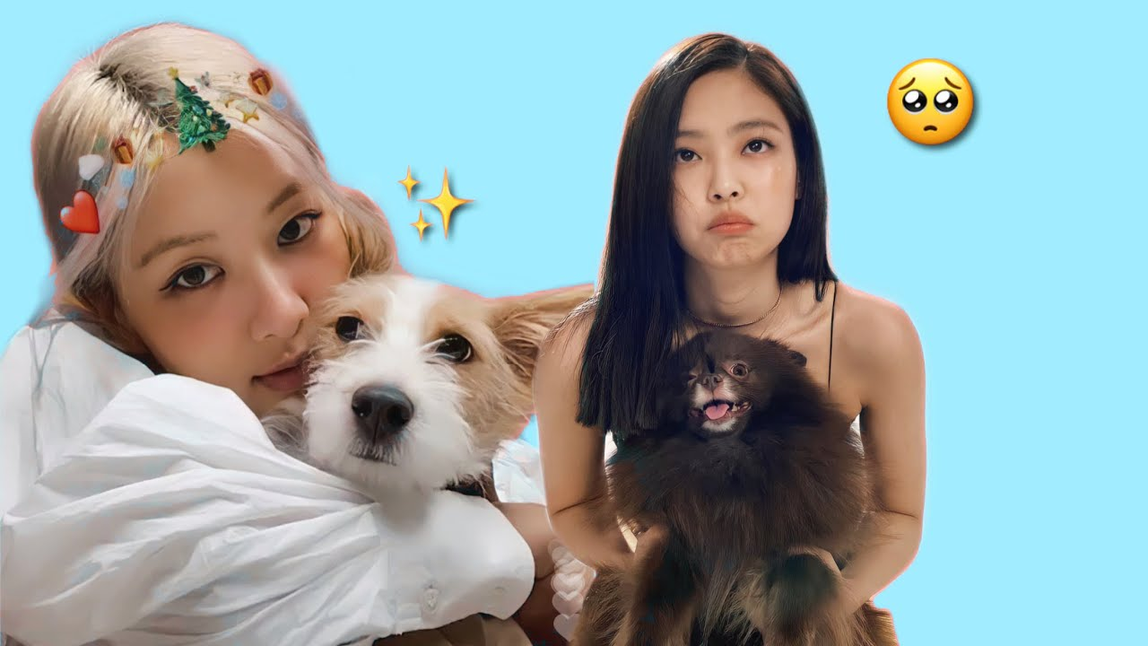 BLACKPINK Playing With Their Pets | Cute Moments