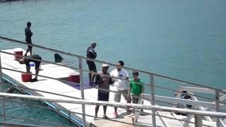 Dolphin Show (Ocean Adventure) 2014