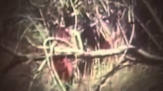 1st Air Cavalry Division on Patrol Search for Enemy in Dense Jungle  Vietnam War 1971