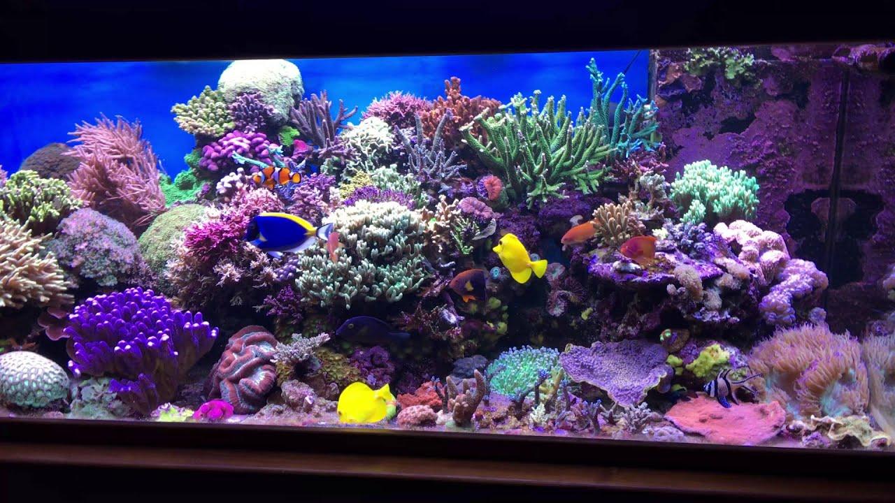 Ehrf rchtige aquarium eau de mer complet id es de for Aquarium marin complet