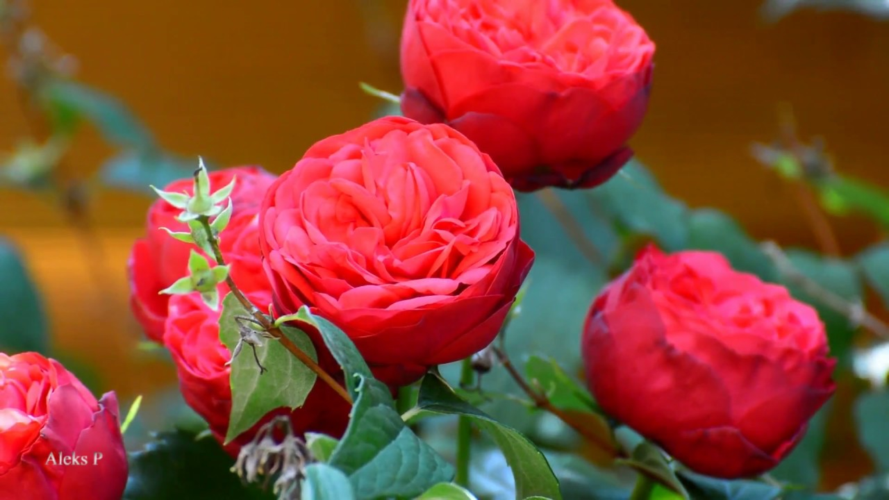 цветы фото природа фото