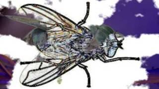 Rabbit care - Myiasis - Flystrike in Rabbits - An Information film