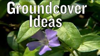 Groundcover Ideas