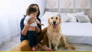 Flooring Near Redmond, OR - Perfect Flooring Options For Your Little Pup