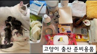 고양이 출산 준비용품