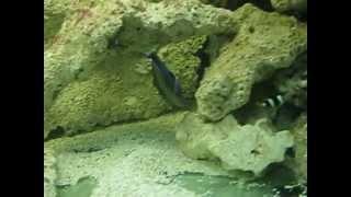 Oceanarium Jastrzębia Góra