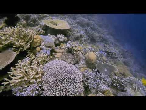 The Scape of Tomia Island, WAKATOBI, INDONESIA