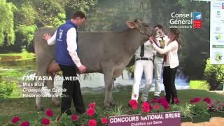 Concours National Brune 2013 à Châtillon-sur-Seine