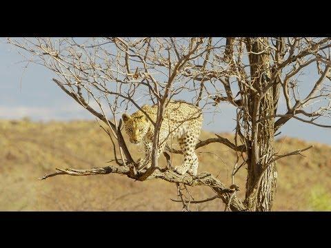 Pride of Namibia