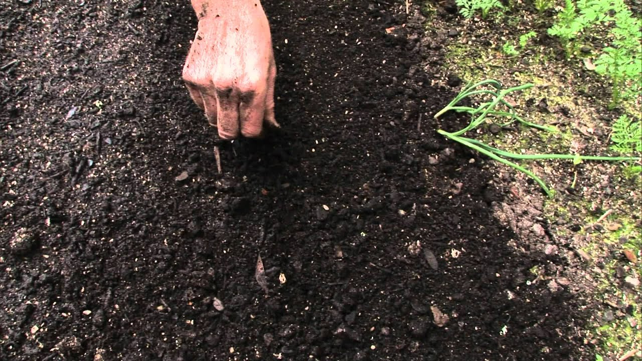 How To Sow A Seed Directly Into Garden Youtube