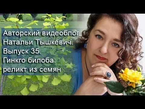 Гинкго билоба (листья) - YouTube