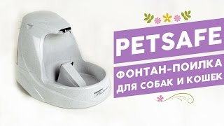 видео Поилка для кошек – фонтан
