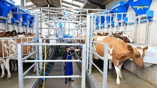 Milk production up. Feed cost down. How?
