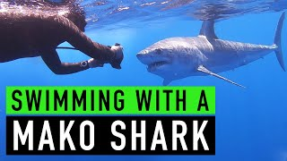 Swimming with a Mako Shark