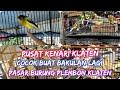 Survei Pasar Pusat Kenari Murah Di Klaten Cek Harga Kenari Terbaru   Mp3 - Mp4 Download
