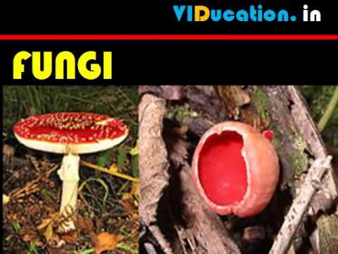 CBSE 9_sci chap7 DIVERSITY IN LIVING ORGANISMS 1