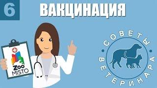 Вакцинация Животных | Зачем нужны прививки собаке и кошке | Советы Ветеринара