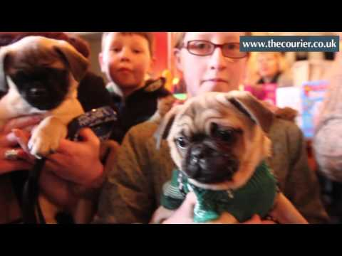 Pug party book launch
