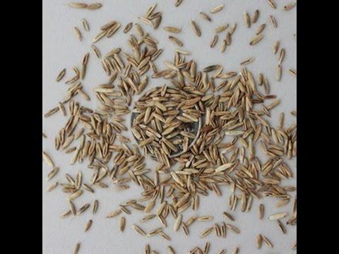 Распаковка посылки №26 с сайта AliExpress семена травы для газона. Kitai 4U