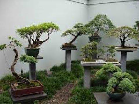 Бонсай. Bonsai. 盆栽    Выставка-продажа ( 2 часть) . Цены.