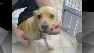 # Animals for Adoption at TLC week of 9 24 2017# thumbnail
