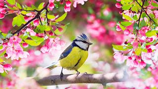 "Relaxing Sleep Music: Deep Meditation Music,  Bird sounds ,  ""Soothing Sounds of Nature"" Tim Janis"