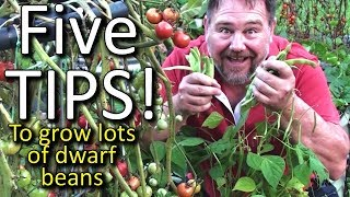 5 Top Tips How to Grow a Ton of Dwarf Beans in a Small Raised Garden Bed or Container