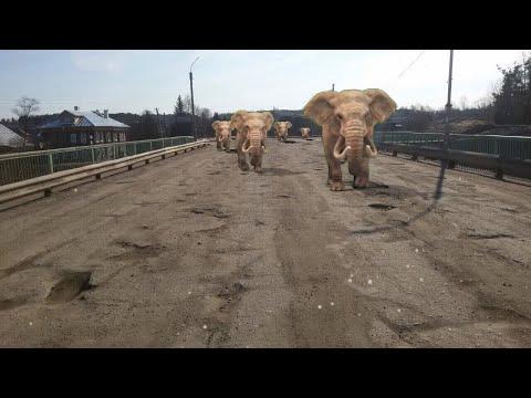 Солигалич. По улицам Слонов водили.....