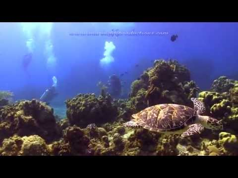 Columbia Shallows Cozumel (Marine life productions)