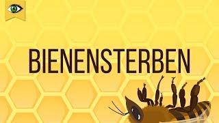 Bienensterben - Schlaumal Doku