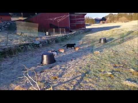 Kaningjengen som søker nye hjem