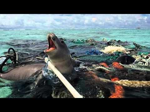 Plastic Ocean - YouTube