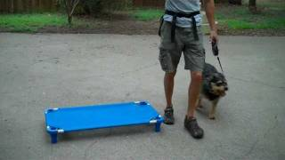 Charlie The Terrier Mix | Redeeming Dogs | Lewisville Dog Training