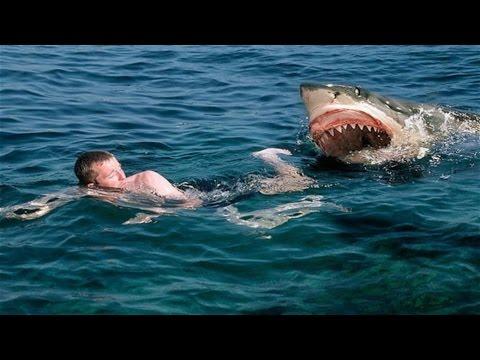 Дикая природа Охота на охотника Нападение акул National Geographic Wild