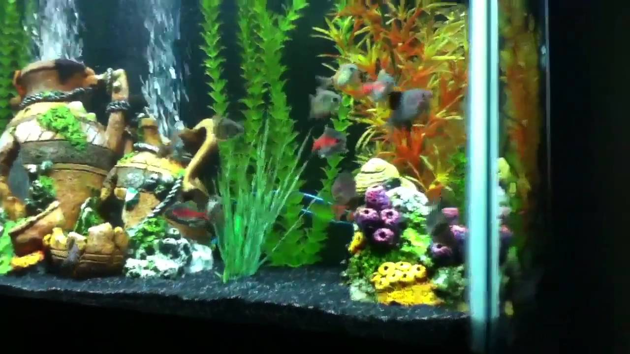 38 gallon fish tank youtube for Youtube fish tank