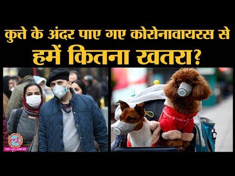 Hongkong के जिस Dog में Coronavirus मिला है, उससे Infection का कितना खतरा है?