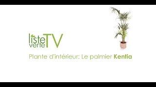 Plante d'intérieur: Le palmier Kentia