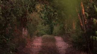 Fared Shafinury - Harfa - Austin Music Video