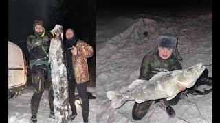 Огромный судак и толпа сомов Winter spearfishing in Russia Huge zander and many big catfishes
