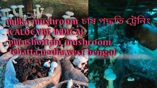 Milky Mushroom cultivation training