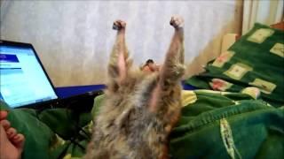 Узбагойся - Лемур в шоке танцует (Песня от группы Фактор 2 )