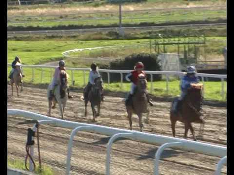 Caspian horses med i Galopp