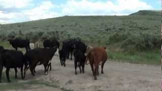Moving Cows and  What's in a Tag Number