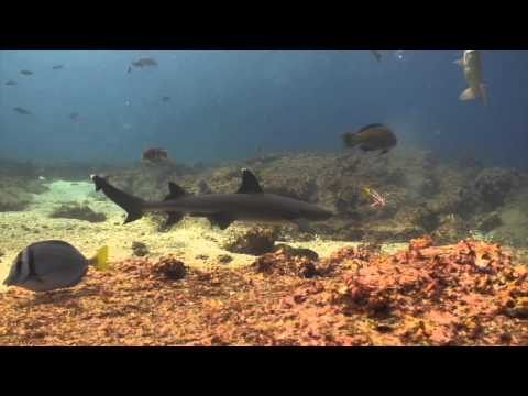 Extended Footage - Galapagos Aggressor 2  Jan 2nd to 9th - Bob Latif