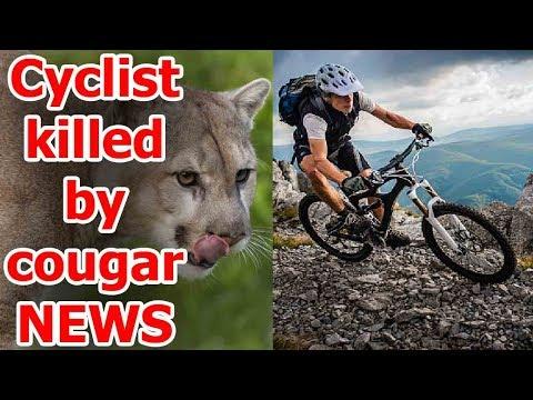 latest news of cougar - cougar attack washington - cougar kills mountain biker - cougar kills biker
